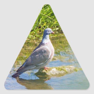 Rejoindre un parti politique - Page 8 Beautiful_pigeon_bird_photo_portrait_stickers-p217946427702249421b7443_400