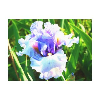 Blue Iris Watercolor Art Print Wrapped Canvas Gallery Wrap Canvas