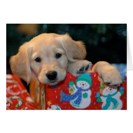 EVY  a voulu voir les anges... Golden_puppy_present_christmas_card-rac5131d60833445aa69ba75885f8c090_xvuak_8byvr_512