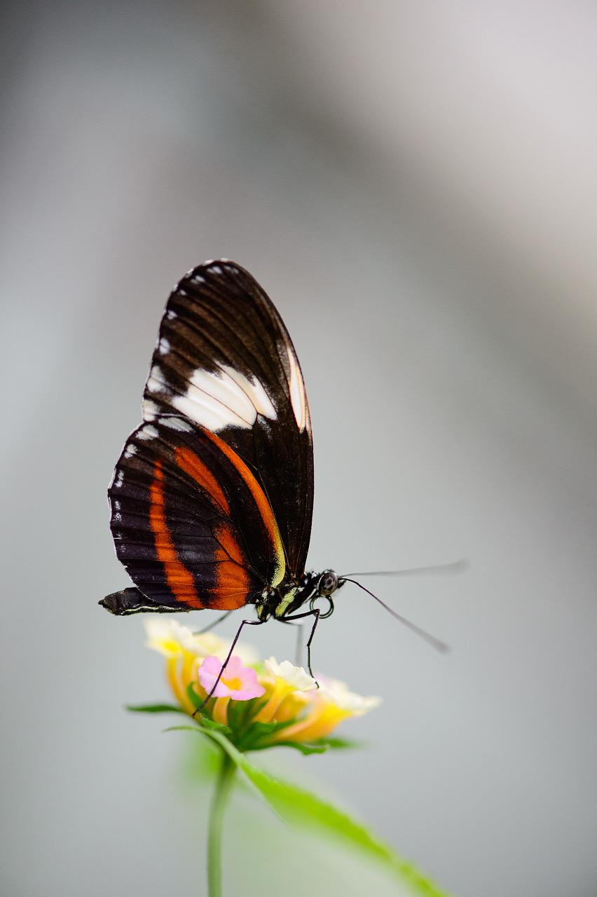 Sortie macro, serre papillons de Grevenmacher - 22 avril 2017 - les photos D4S_4781