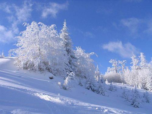 pune poza cere poza - Pagina 16 Peisaj-de-iarna-poiana
