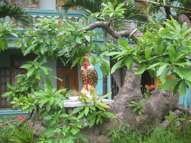 Bán cây lộc vừng: Cá SẤU vờn mồi - Làng ẩm thực Hoàng Gia Nam Định 201304161624_img_3473