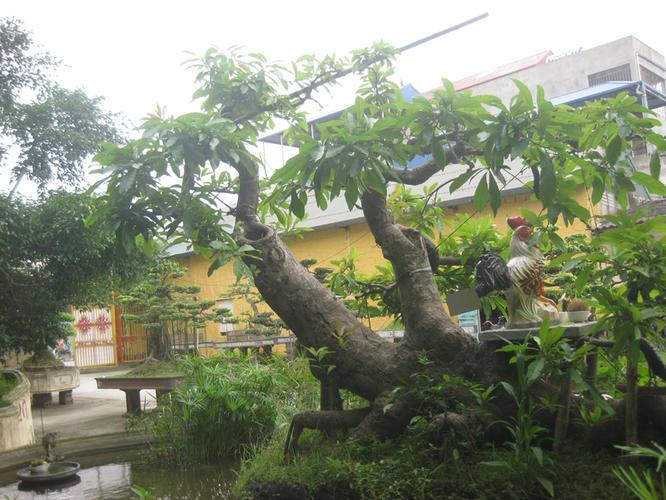 Bán cây lộc vừng: Cá SẤU vờn mồi - Làng ẩm thực Hoàng Gia Nam Định 201304161807_img_3477