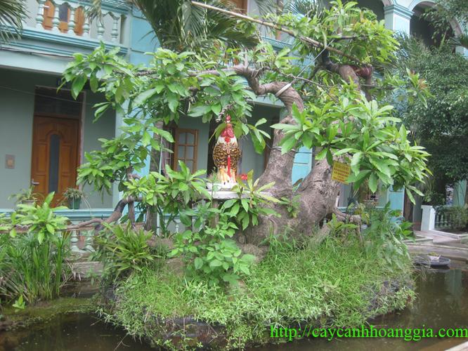 Bán cây lộc vừng: Cá SẤU vờn mồi - Làng ẩm thực Hoàng Gia Nam Định 201304164100_img_3468_copy