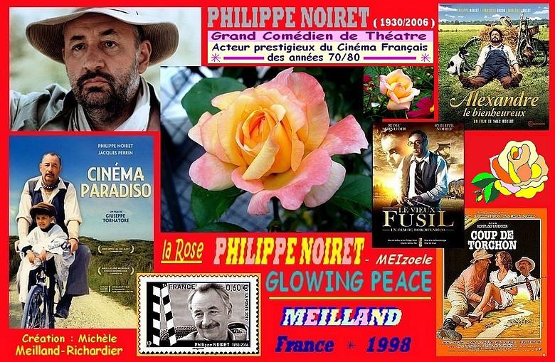 Discussion sur l' Etoile de TF1 du  15  juin   2016 - Page 2 Rose-philippe-noiret-meizoele-glowing-peace-meilland-1998-roses-passion