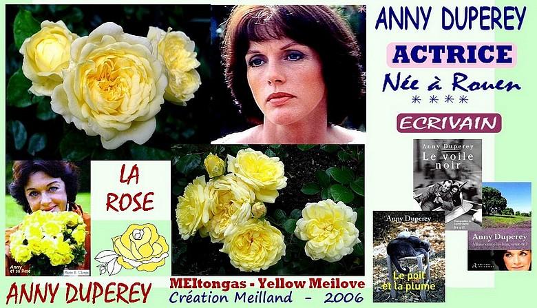Discussion sur l' Etoile de TF1 du  15  juin   2016 - Page 3 Rose.anny.duperey.-.meitongas.-.yellow.meilove.-.meilland.-.2006.-.roses.passion.-