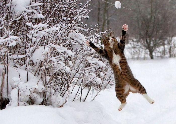 Lidojošie kaķi Pics-0071