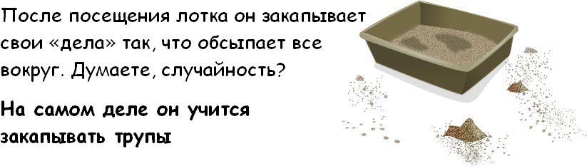 Вся правда о котэ Cat_03