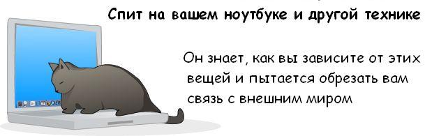 Вся правда о котэ Cat_08
