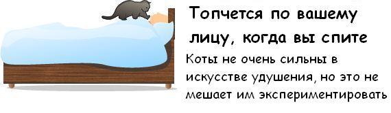 Вся правда о котэ Cat_09