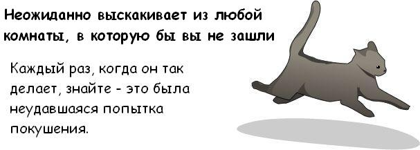Вся правда о котэ Cat_10