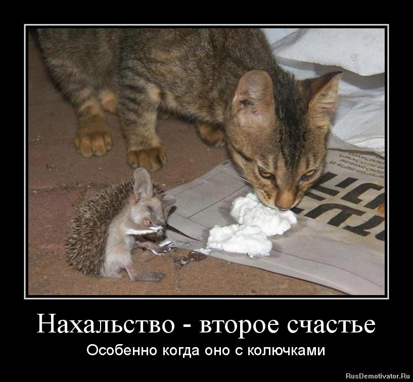 подборка от стасевича 1343393498-naxalstvo-vtoroe-schaste