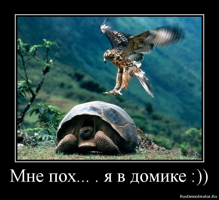подборка от стасевича - Страница 2 20121117233114100