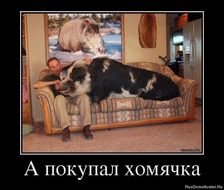 Юмор о разном - Страница 5 1343122476_24746552_a-kupil-homyachka
