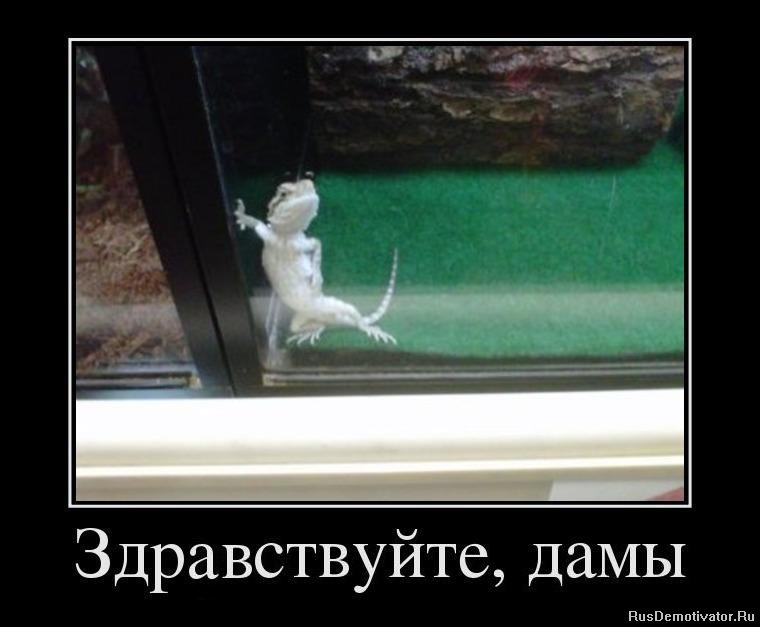подборка от стасевича 1343642102_46508339_zdrastvujte-damyi