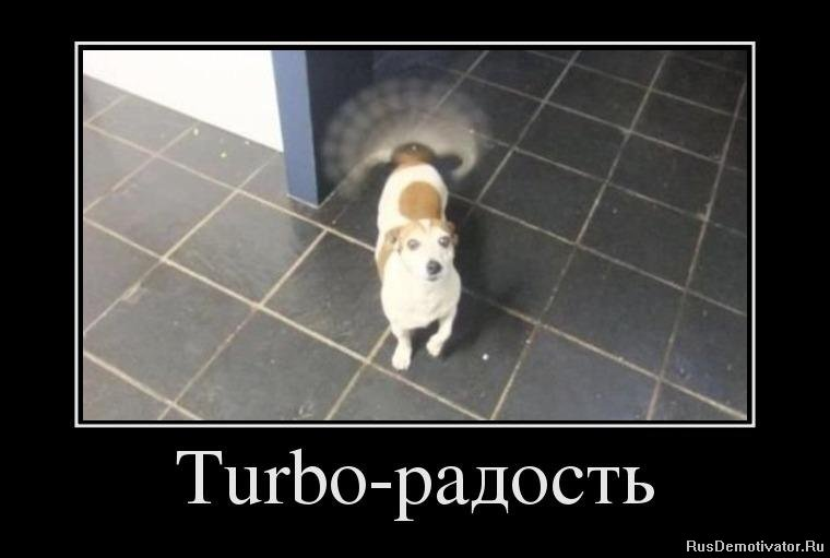 подборка от стасевича - Страница 5 1348481128_97776319_turbo-radost