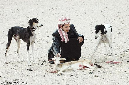 صور كلاب الصيد 250553
