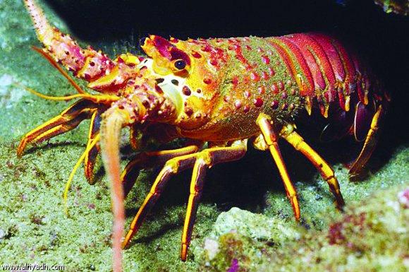 فوائد الرخويات البحرية 300053477192