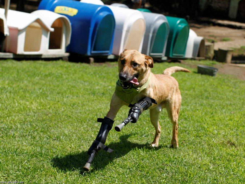 بالصور حيوانات تتحدى الإعاقة 290558904176