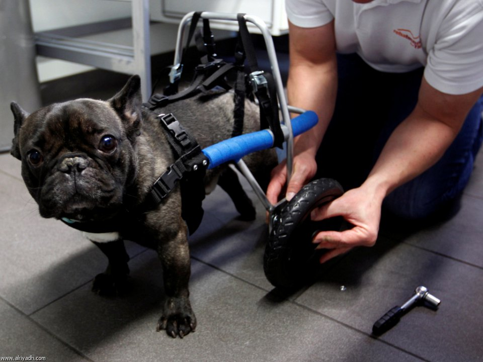 بالصور حيوانات تتحدى الإعاقة 453162821242