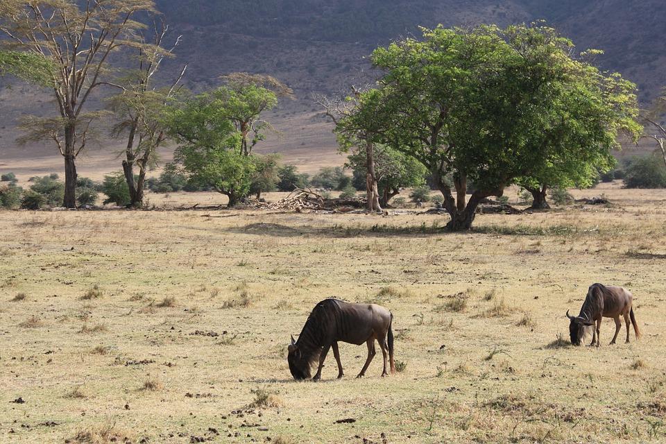 تعرفوا على أجمل الأماكن السياحية في تنزانيا 20161128-1741441293572440