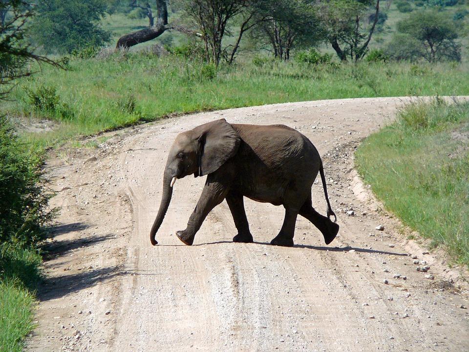 تعرفوا على أجمل الأماكن السياحية في تنزانيا 20161128-1741441576719004