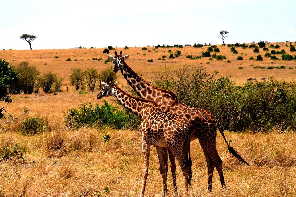 تعرفوا على أجمل الأماكن السياحية في تنزانيا 20161128-174144221682764