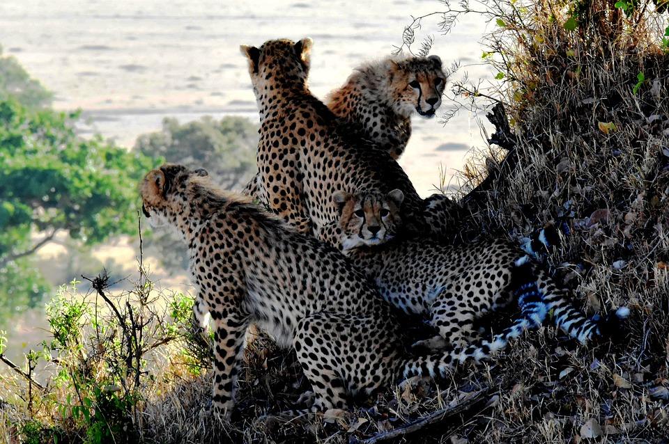 تعرفوا على أجمل الأماكن السياحية في تنزانيا 20161128-1741451535210888