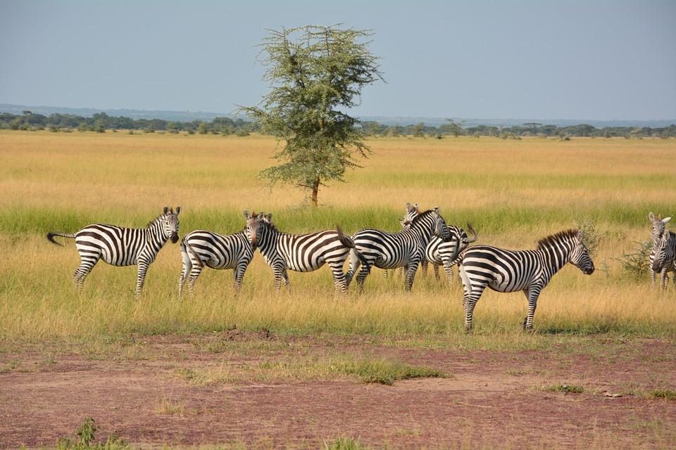 تعرفوا على أجمل الأماكن السياحية في تنزانيا 20161128-174145171038326