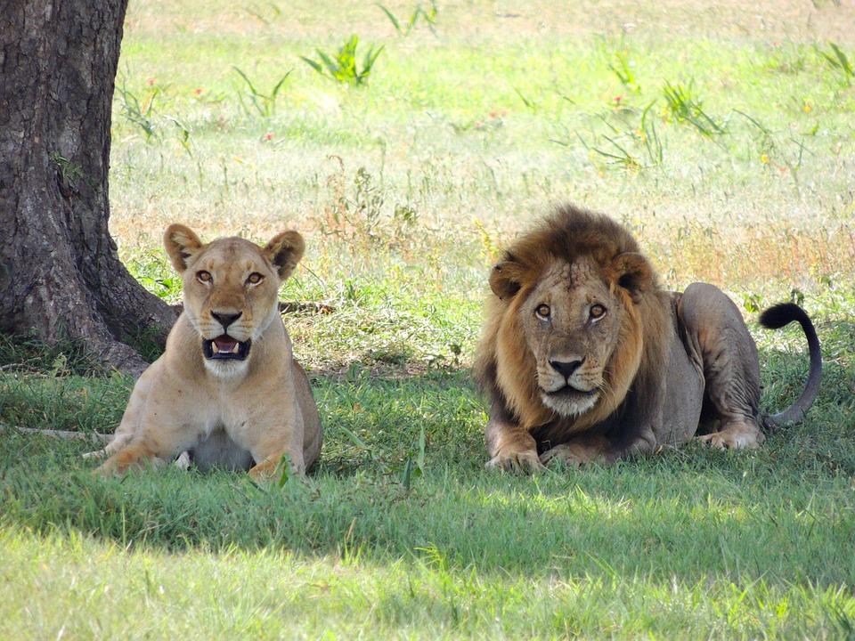 تعرفوا على أجمل الأماكن السياحية في تنزانيا 20161128-174145962053279