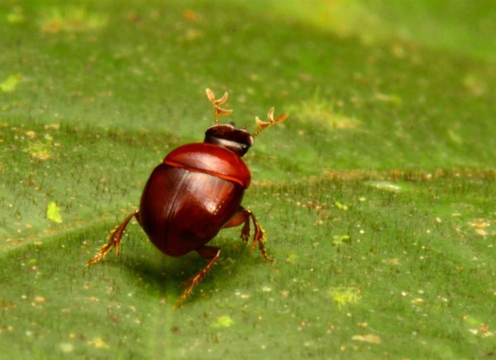 Las selvas de Surinam 05e219bf77995ef69e42172786775ac2