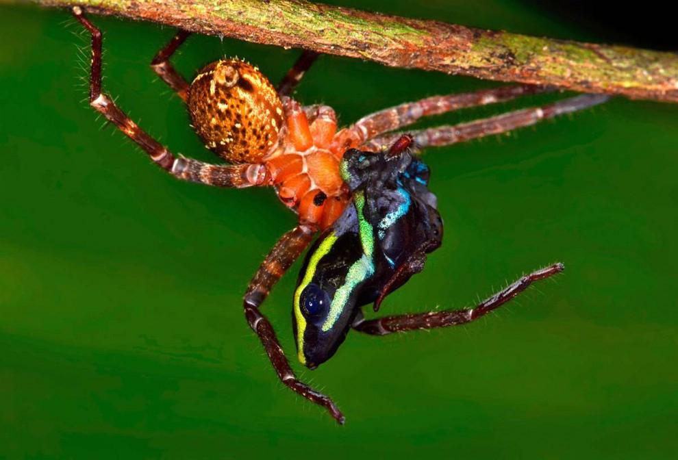 Las selvas de Surinam 1bc2398c88c617be1d4f821b8c88eaa6