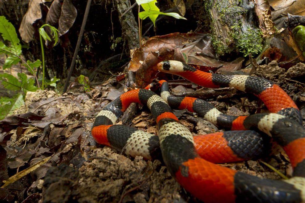 Las selvas de Surinam 473f2f765458af482ffd928816f368c0