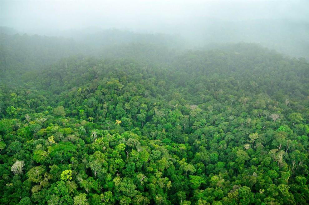 Las selvas de Surinam 62b73812077e9c4fea168d716375c910