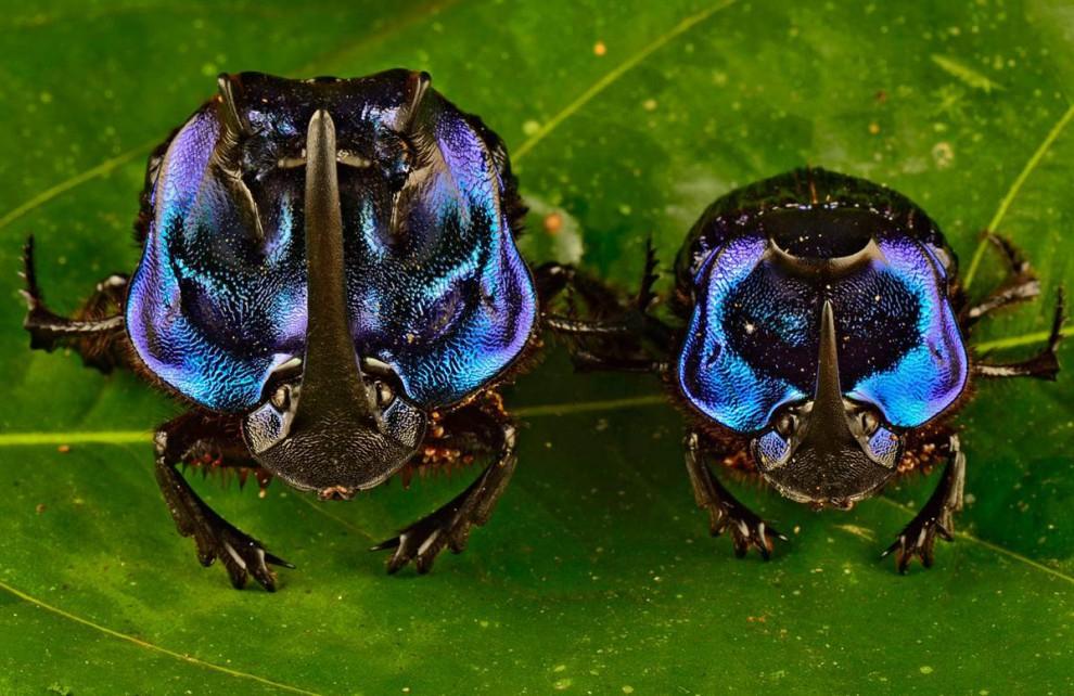 Las selvas de Surinam 8a01b11566955baaf1f19203b1f48339