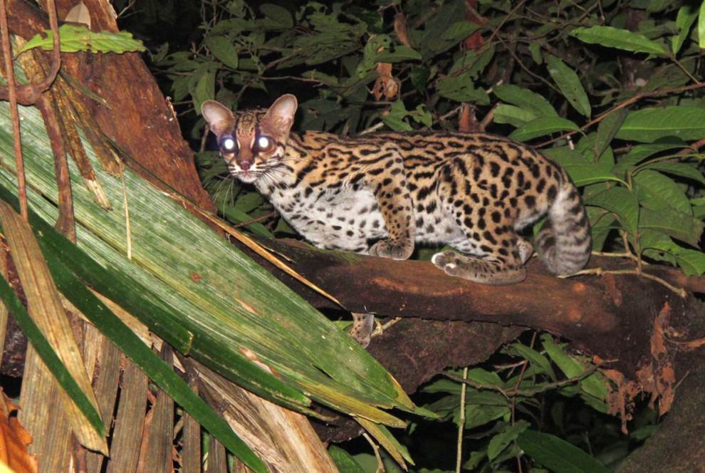 Las selvas de Surinam Ab0082ec2ce4c5470ed14b9c9a649dce