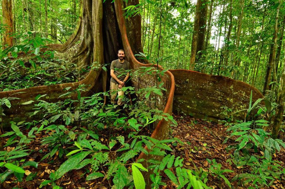 Las selvas de Surinam Acbe7d539972b26846a9d7644b708f71
