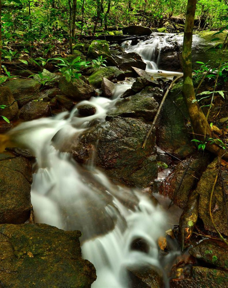 Las selvas de Surinam B6c80939c0e019d2d9066b6e757ba3c0