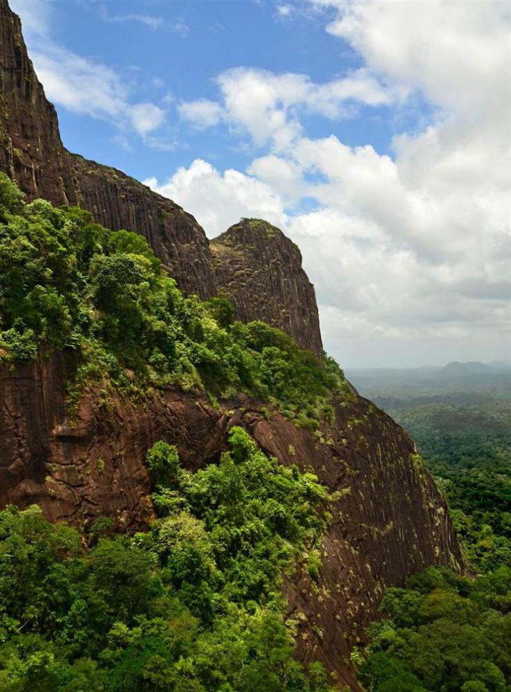 Las selvas de Surinam E39927c9a620e103d21af6c8baf781ff