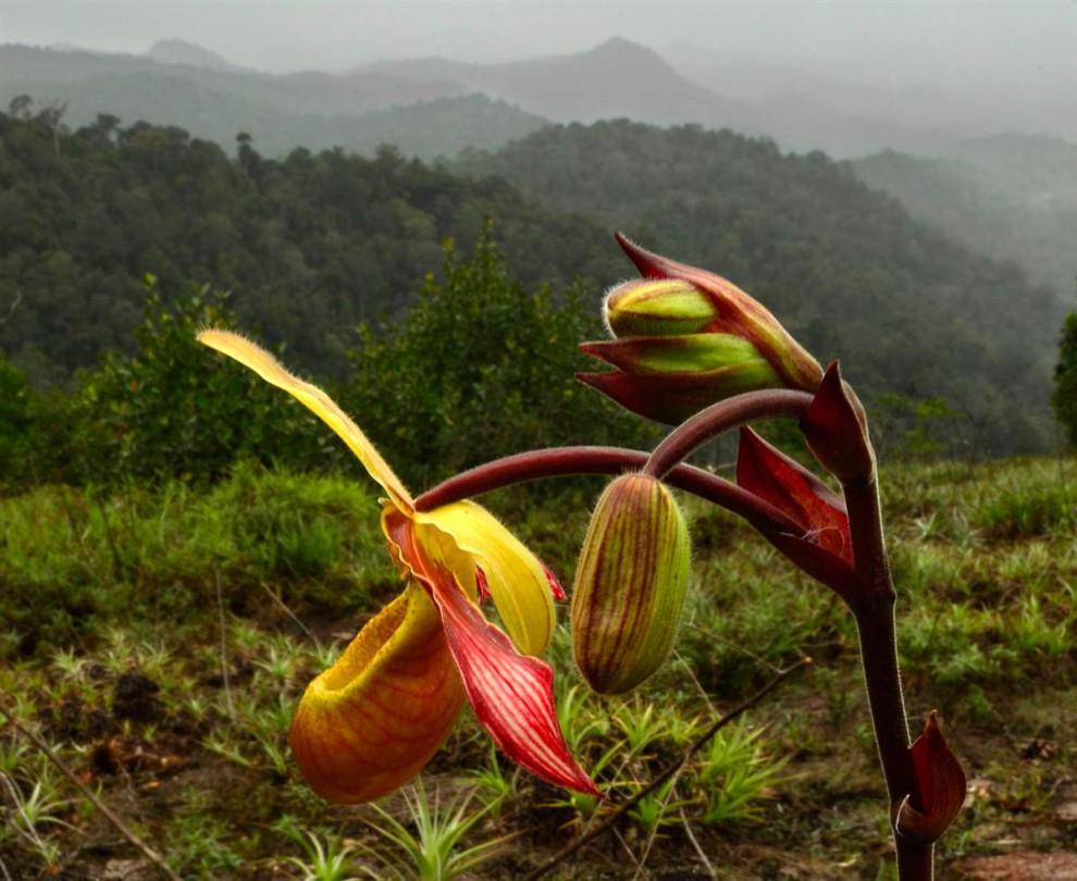 Las selvas de Surinam E4a309e42ec89bc044a68c8643b0d252