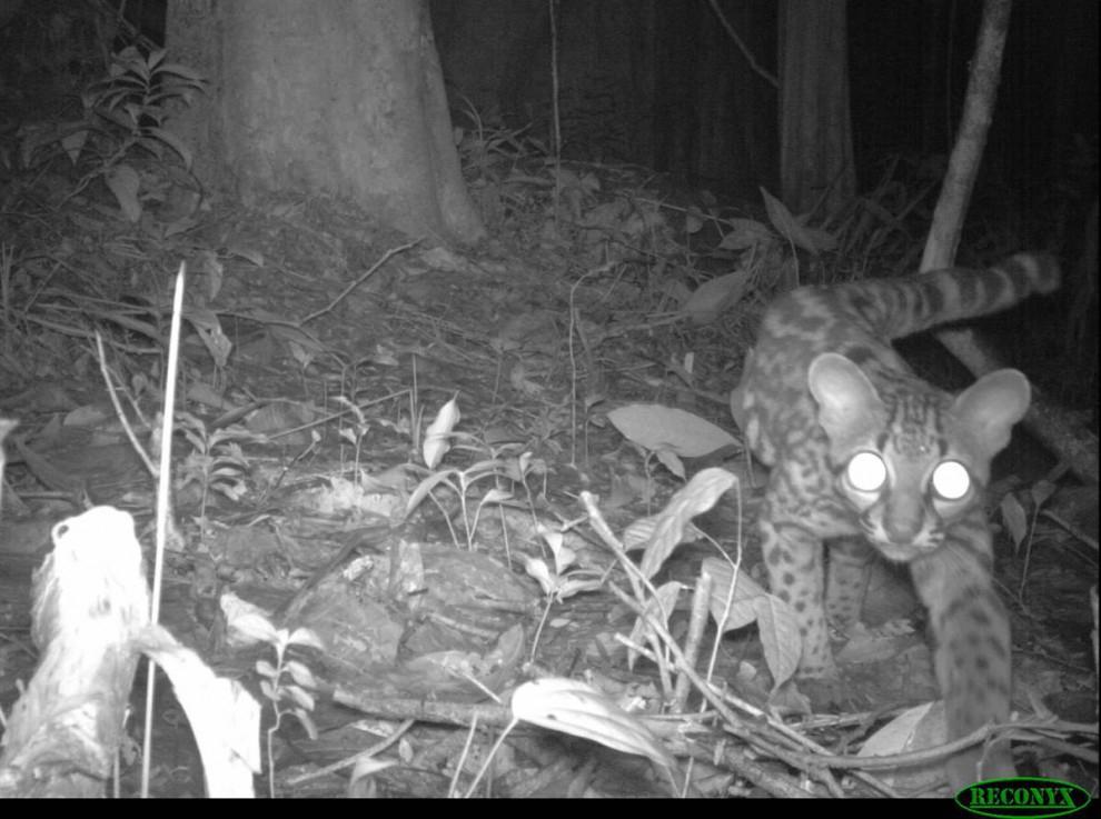 Las selvas de Surinam F47f4438db6c42a24b3febd337bbee6e
