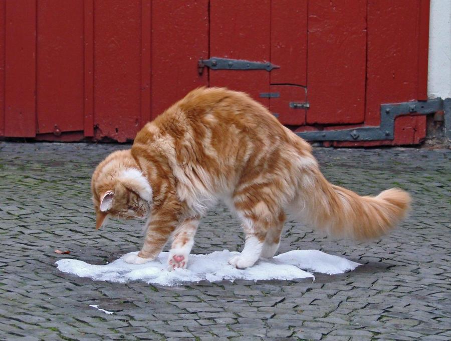 Зима - кошки торжествуют!  1e77440c0a0c0dc211cfd269e7954681