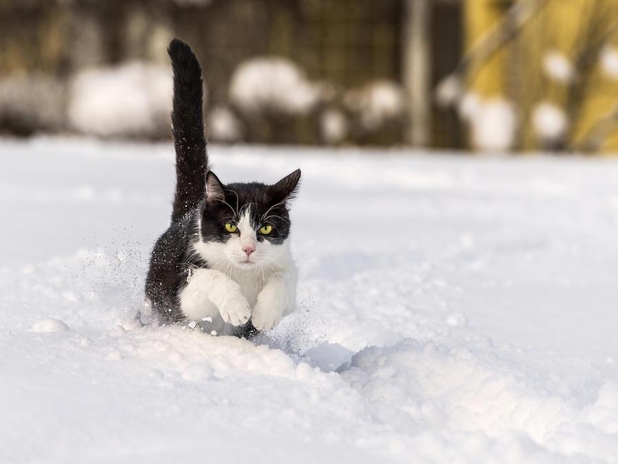 Зима - кошки торжествуют!  2711bd3c0821392c9c4c00cce10e88cc