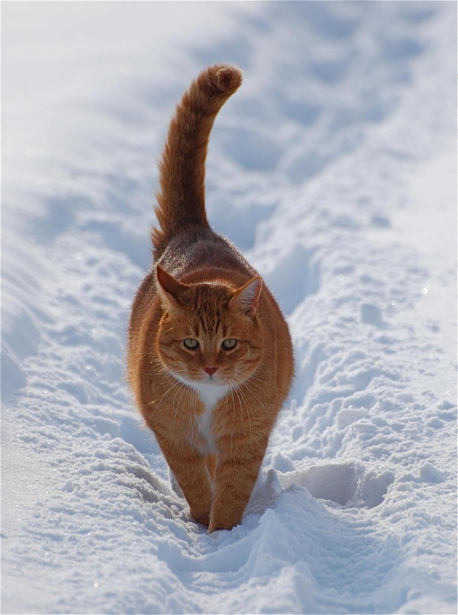 Зима - кошки торжествуют!  28f949120f78ec4e6ba75c3c91c3e238