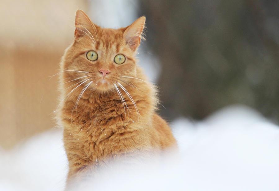 Зима - кошки торжествуют!  2fce09ae8ac7eceabb60c1e20ca7175b