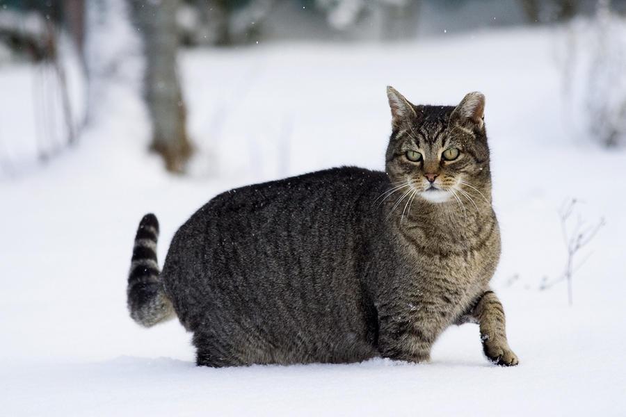 Зима - кошки торжествуют!  32b4b496bf6416addd5a7e1963762caa