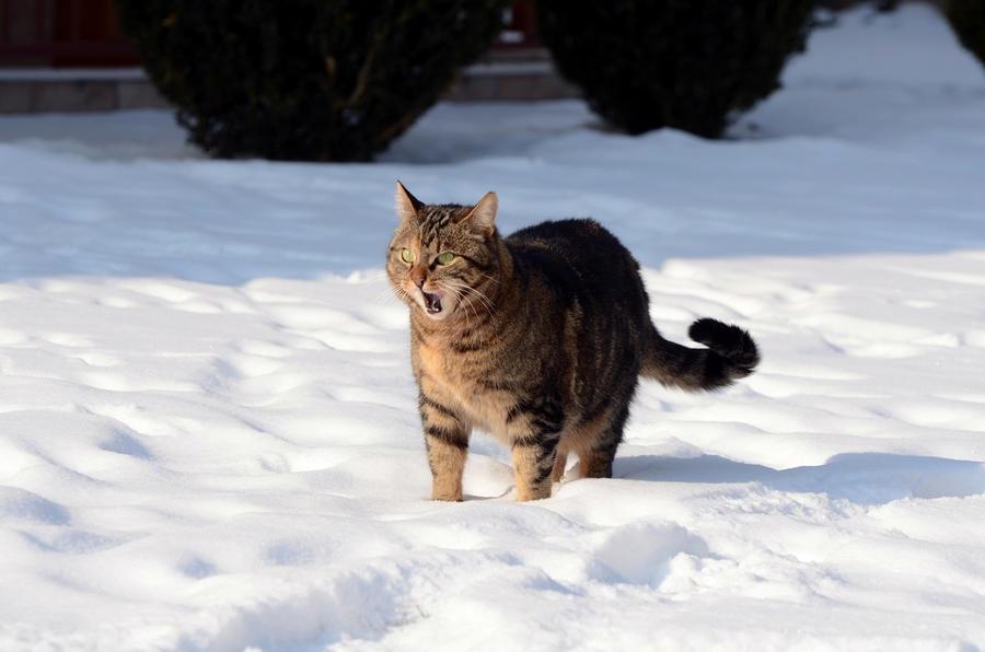 Зима - кошки торжествуют!  Afa19dde6134e24d55eba9e081e1a4ae