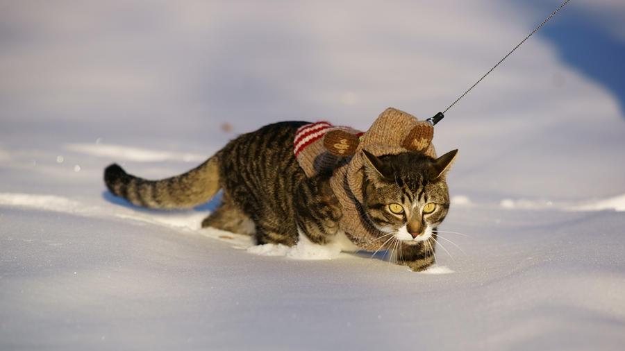 Зима - кошки торжествуют!  Bc2b7c92f3979a636c13e98cc7a6ae12