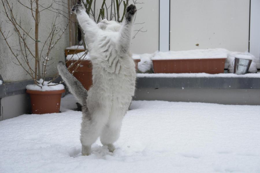Зима - кошки торжествуют!  Be9c01e6960f5a41ac51dd1220ad037c