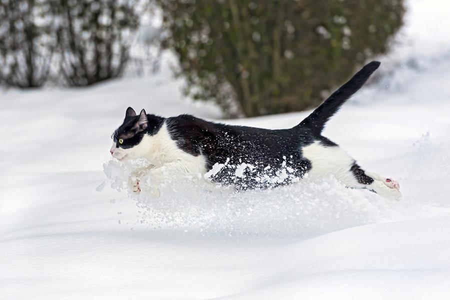 Зима - кошки торжествуют!  Cd338a45f21cfbc530b6eab5f4f0eb70